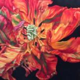 Orange Parrot Tulip II