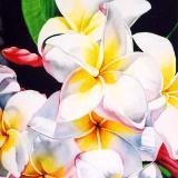 White Plumeria I