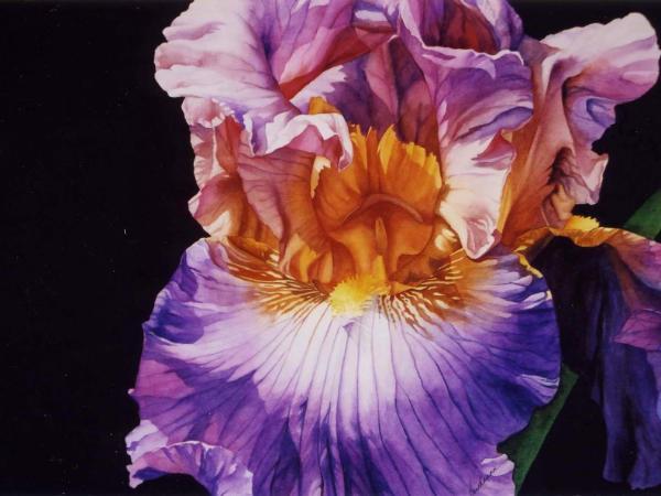 Outrageous Iris