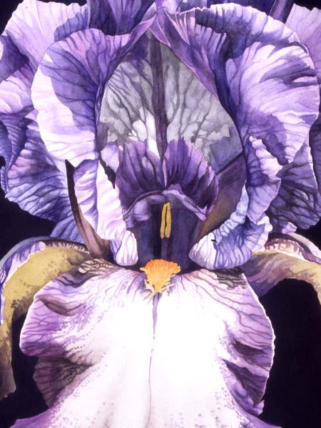 Purple Iris IV