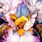 Purple Iris III