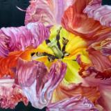 Pink Parrot Tulip II